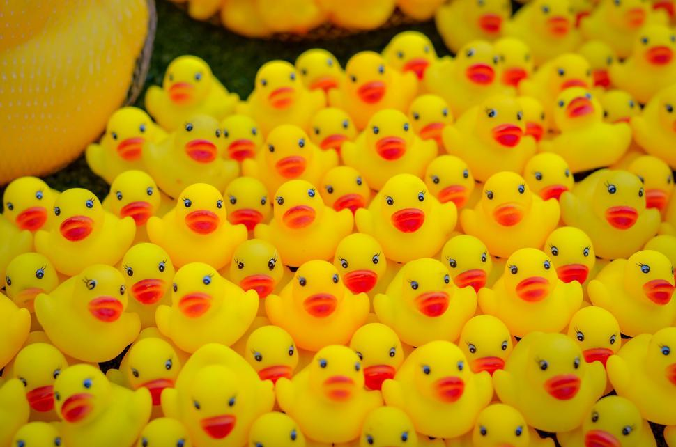 Download Free Stock Photo of Many Rubber Ducks
