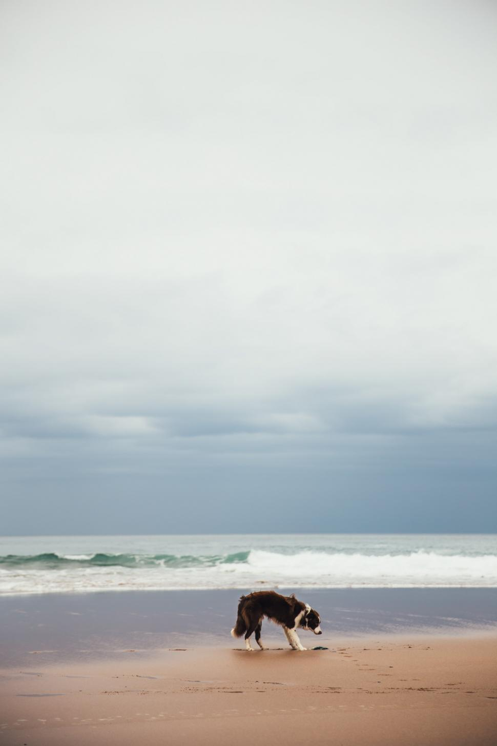 Download Free Stock HD Photo of A dog on the beach Online
