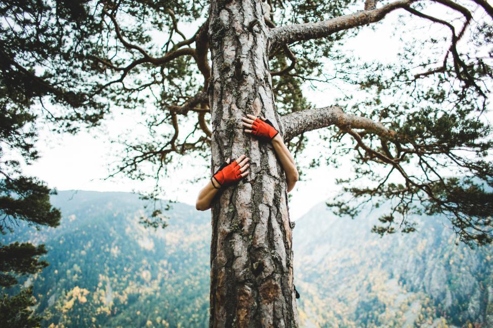 Download Free Stock HD Photo of A hiker hugging a big tree - Tree Hugger Online