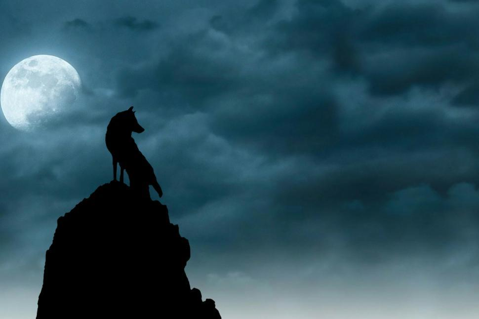Download Free Stock HD Photo of wolf under moonlight  Online
