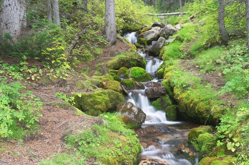 Download Free Stock Photo of Roadside Stream