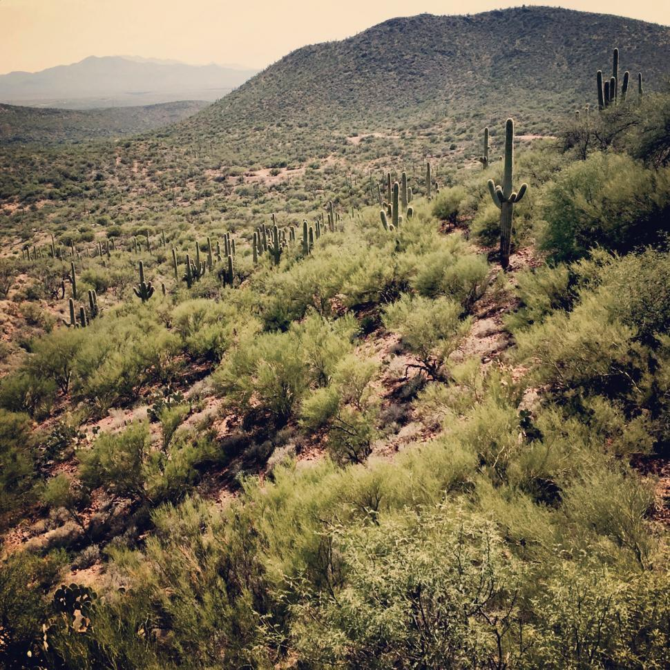 Download Free Stock Photo of Sonoran Desert South of Tucson