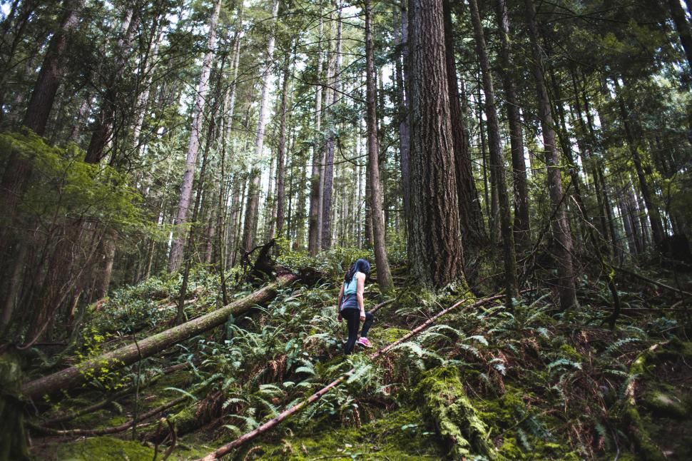 Download Free Stock HD Photo of A young female hiker in the forest Online