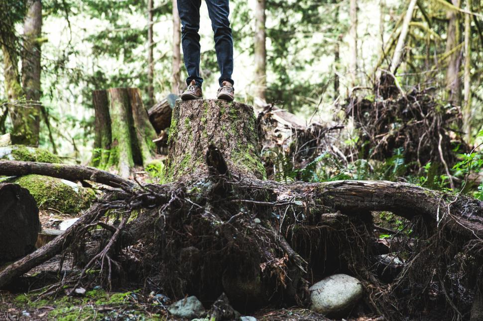 Download Free Stock Photo of A hiker standing on a large tree stump in the forest