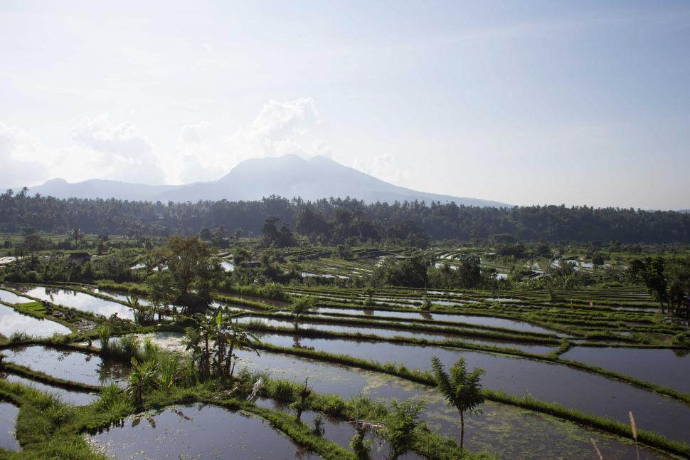 Download Free Stock HD Photo of A panoramic view of rice fields filled with water Online