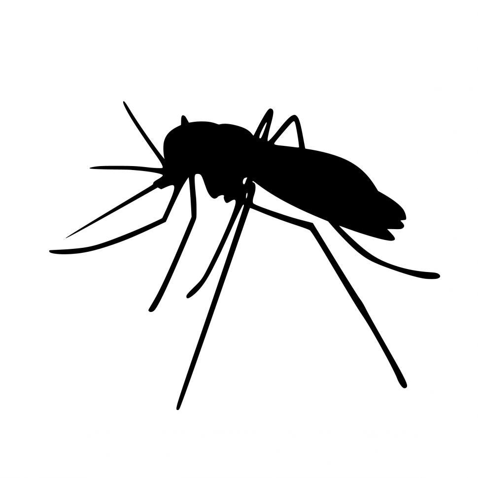 Download Free Stock Photo of mosquito Silhouette