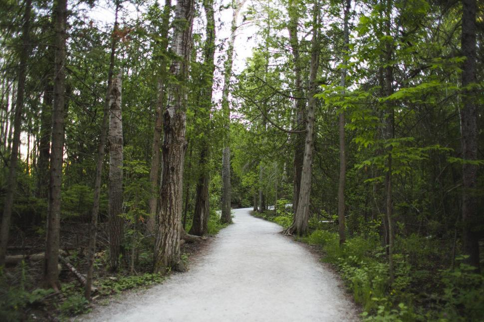 Download Free Stock Photo of A path in the forest