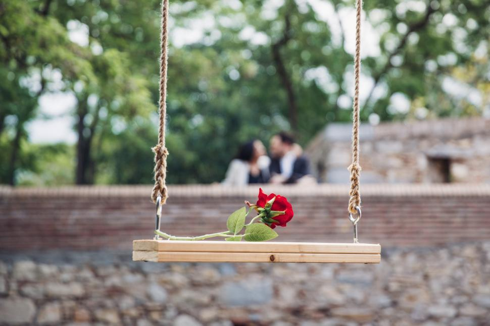 Download Free Stock Photo of A romantic red rose on the wooden swing
