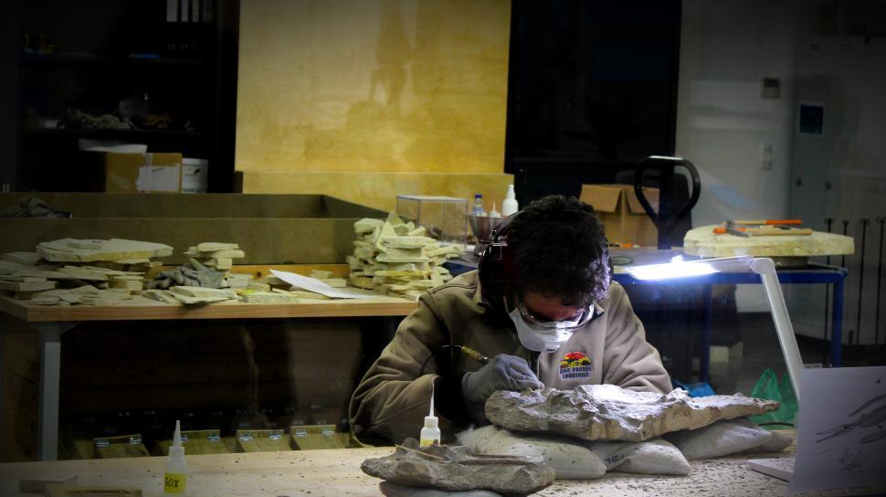 Download Free Stock Photo of Paleontologist Working on Ichthyosaur Fossil - Lourinha - Portug