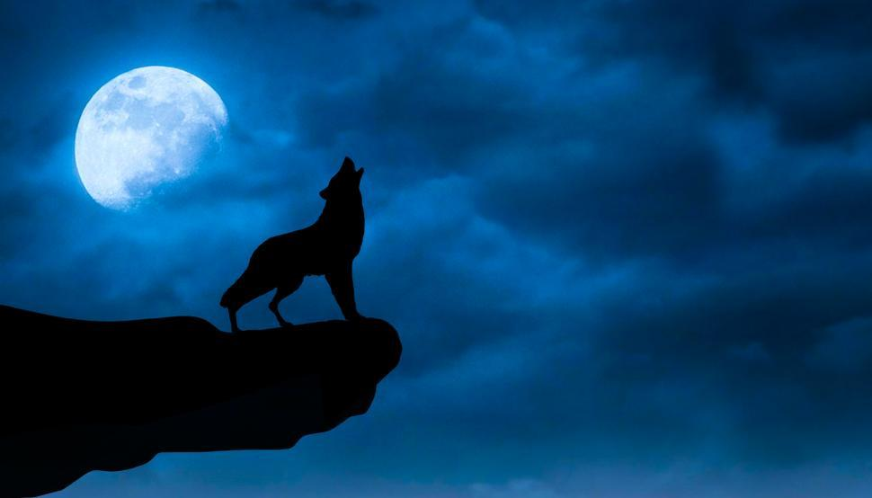 Download Free Stock Photo of night wolf