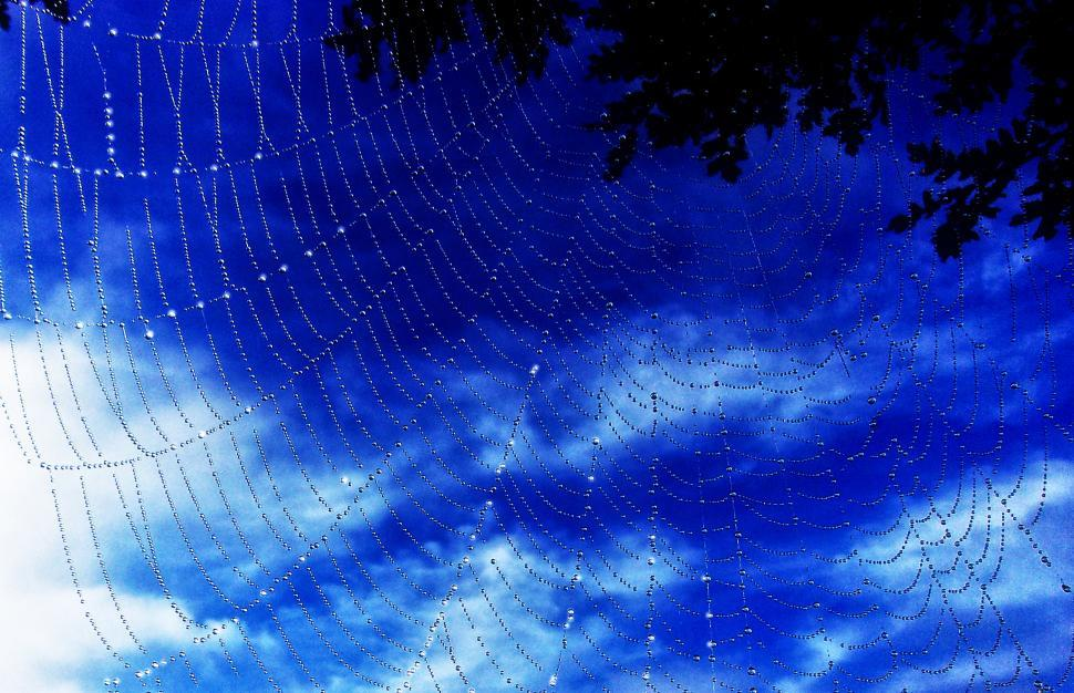 Download Free Stock Photo of Dew Drops On Spider Web - A New Morning