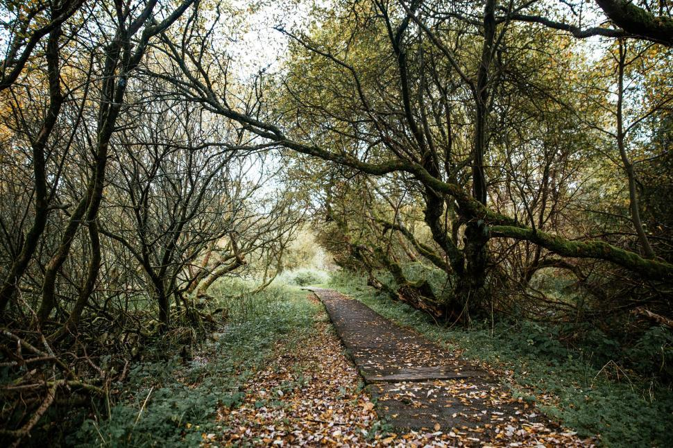 Download Free Stock HD Photo of A path in the forest Online