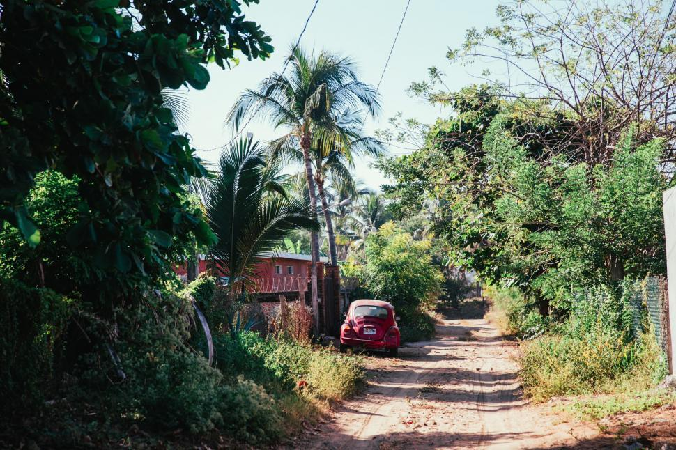 Download Free Stock Photo of A dirt road through tropical greenery