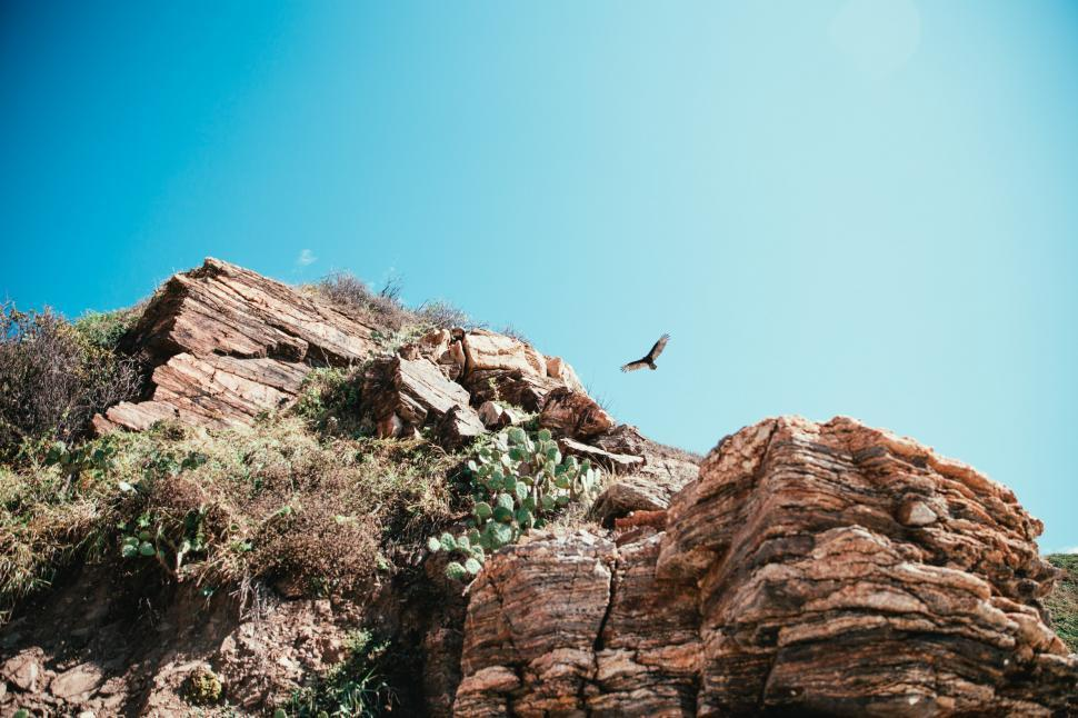 Download Free Stock HD Photo of Hawk hunting over desert cliff Online