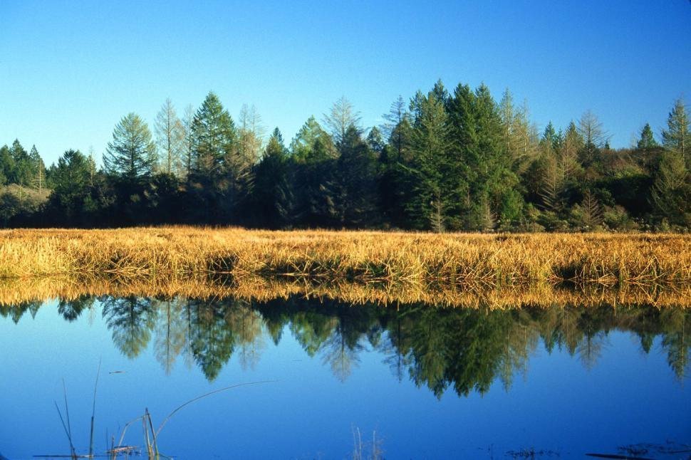 Download Free Stock Photo of Lake, reeds and trees