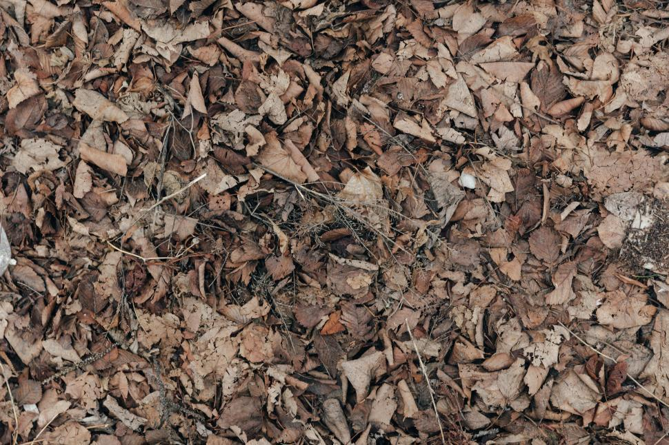 Download Free Stock Photo of Dead leaves texture on the ground