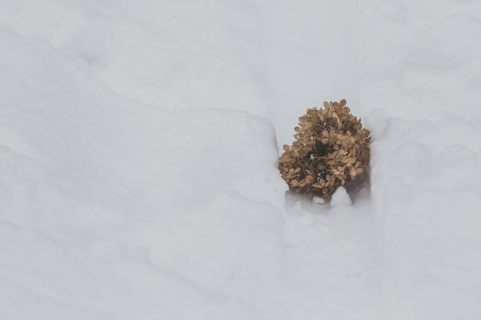 Download Free Stock Photo of Close up of dried flowers fallen on snow