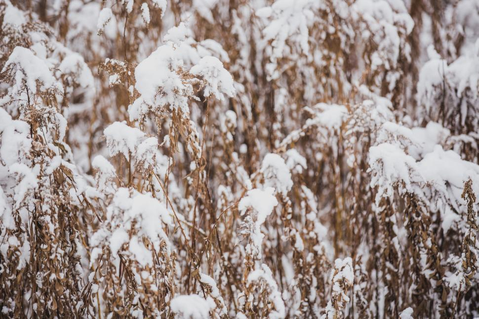 Download Free Stock HD Photo of A close up of snow on dried grass Online