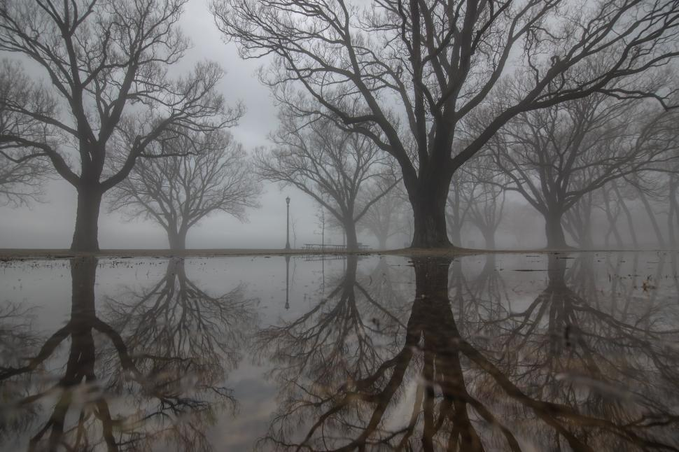 Download Free Stock Photo of Large trees with their reflections on the water