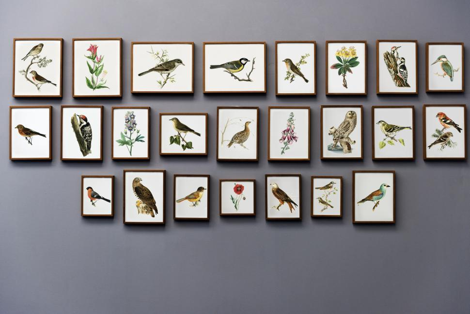 Download Free Stock Photo of An art gallery wall with paintings of birds and flowers