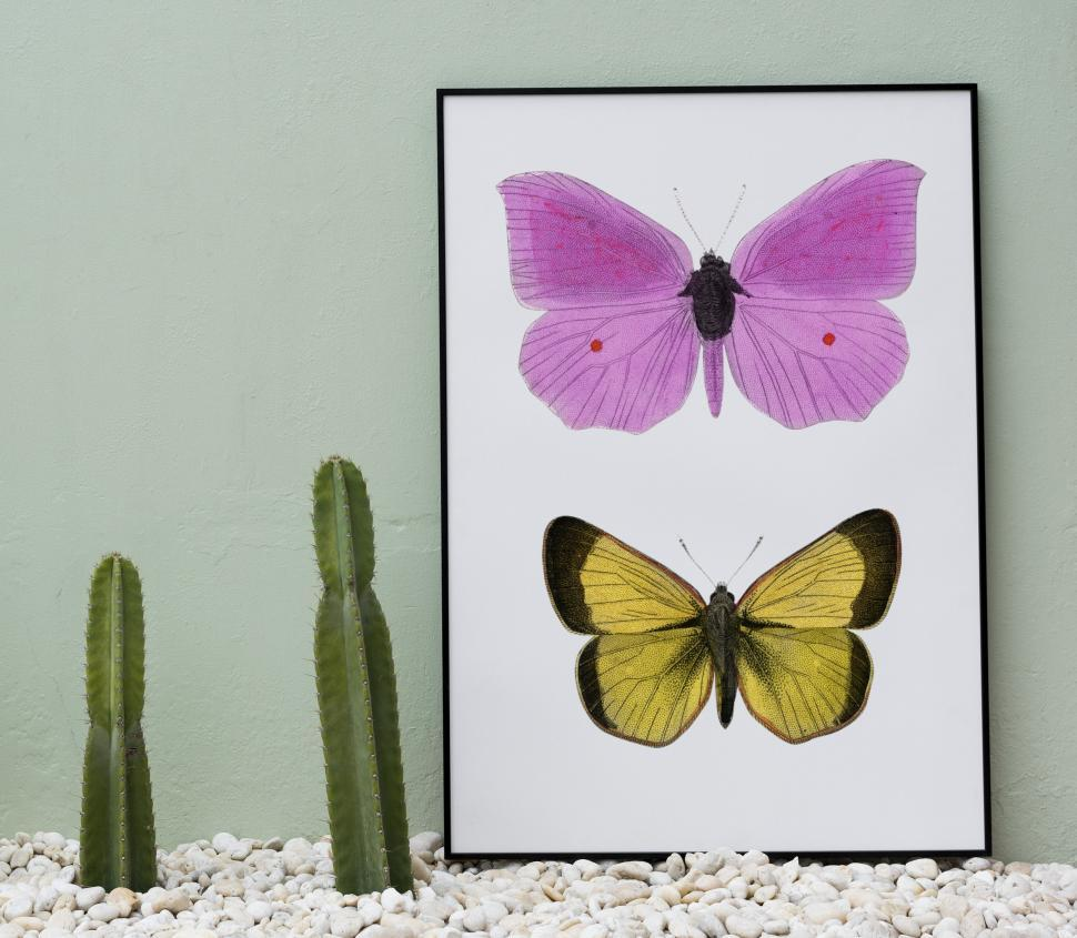 Download Free Stock Photo of Home decor with two butterflies in a picture and cactus plants