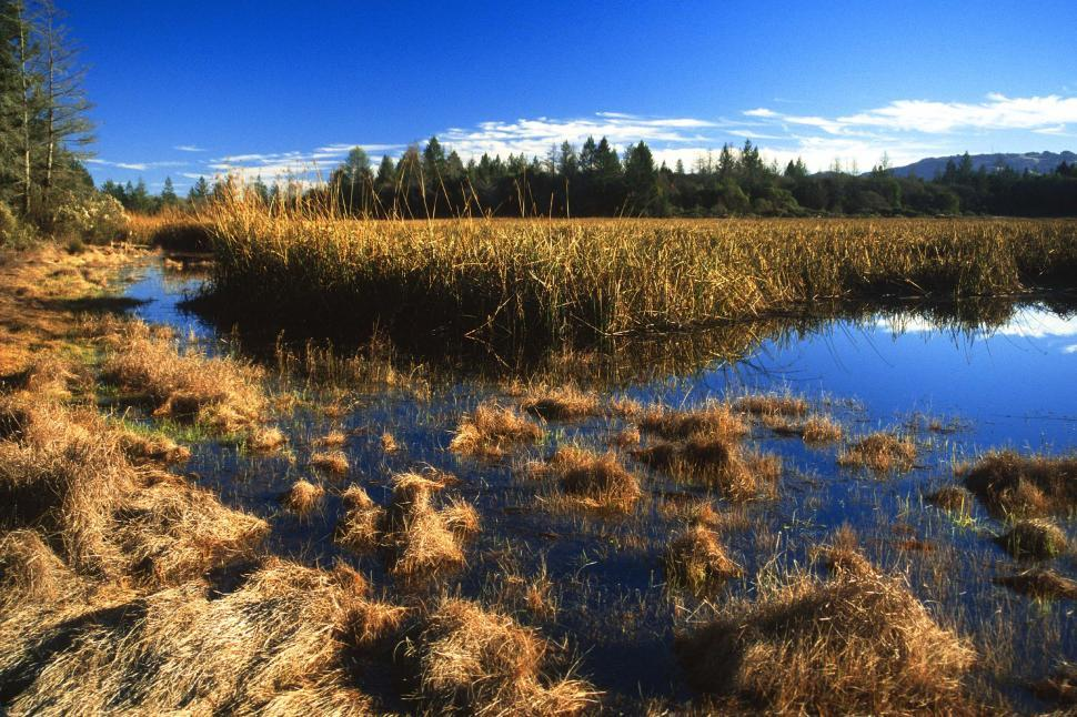 Download Free Stock HD Photo of Marsh with reeds Online
