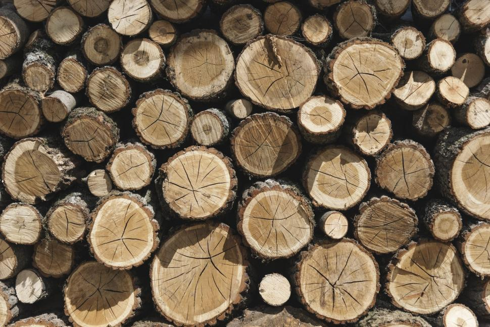 Download Free Stock Photo of A pile of cut tree trunks