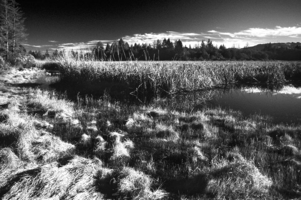 Download Free Stock HD Photo of Dramatic black and white of marsh Online