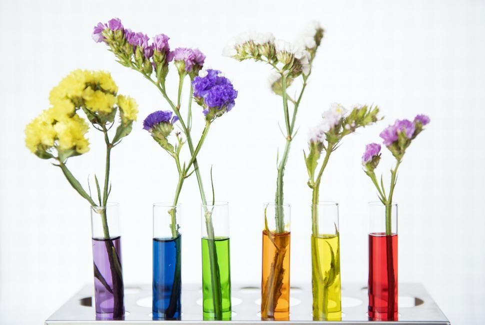 Download Free Stock HD Photo of Colorful test tube shaped flower vases Online