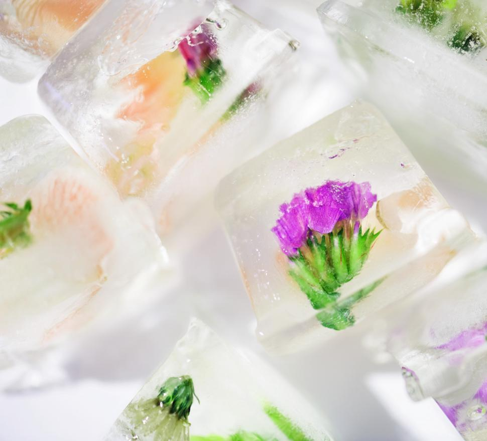 Download Free Stock Photo of Edible flower ice cubes