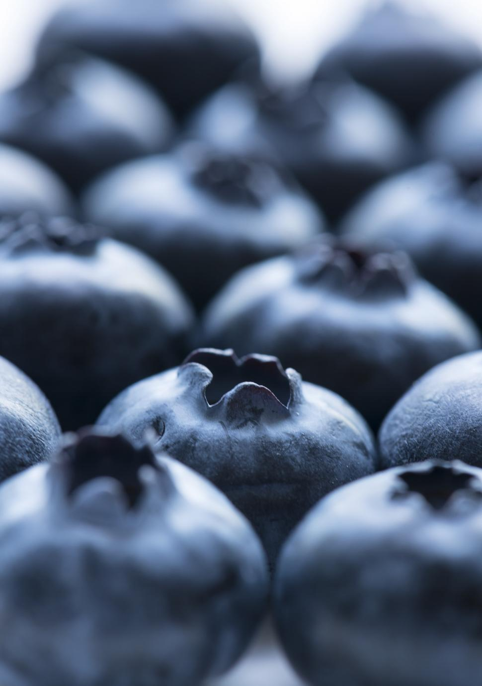 Download Free Stock HD Photo of Close up of blueberries Online