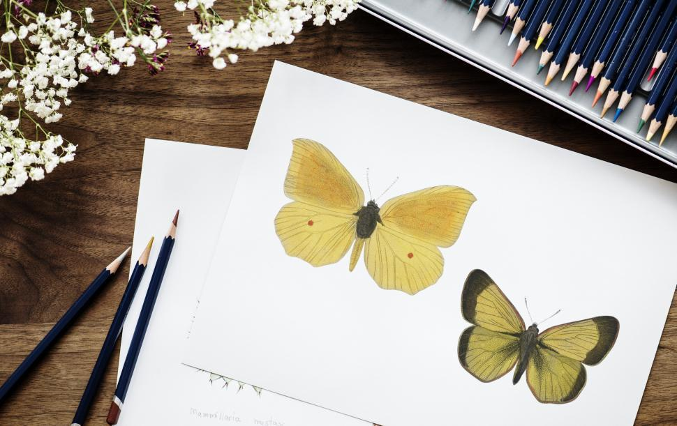Download Free Stock HD Photo of Butterflies  picture surrounded with color pencils Online