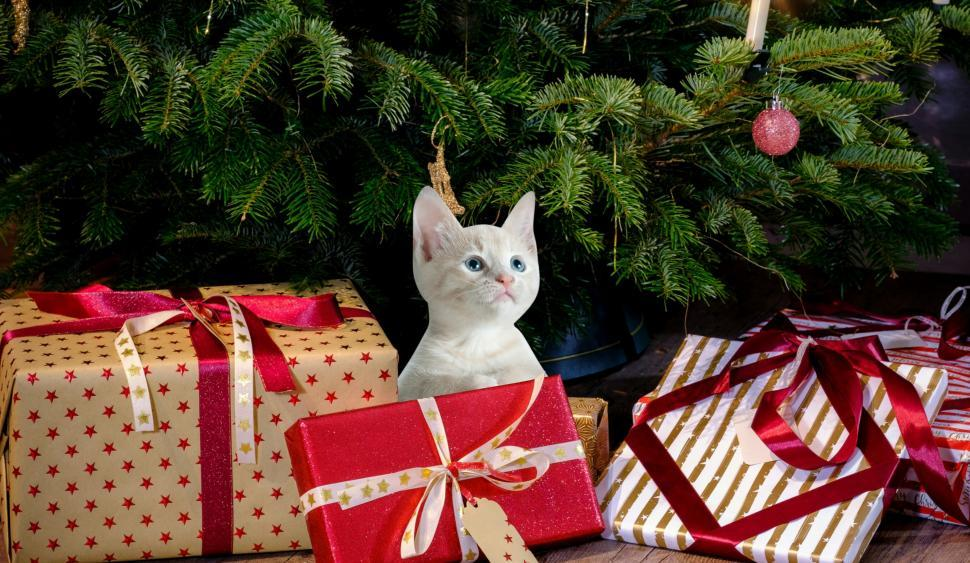 Download Free Stock HD Photo of christmas cat  Online