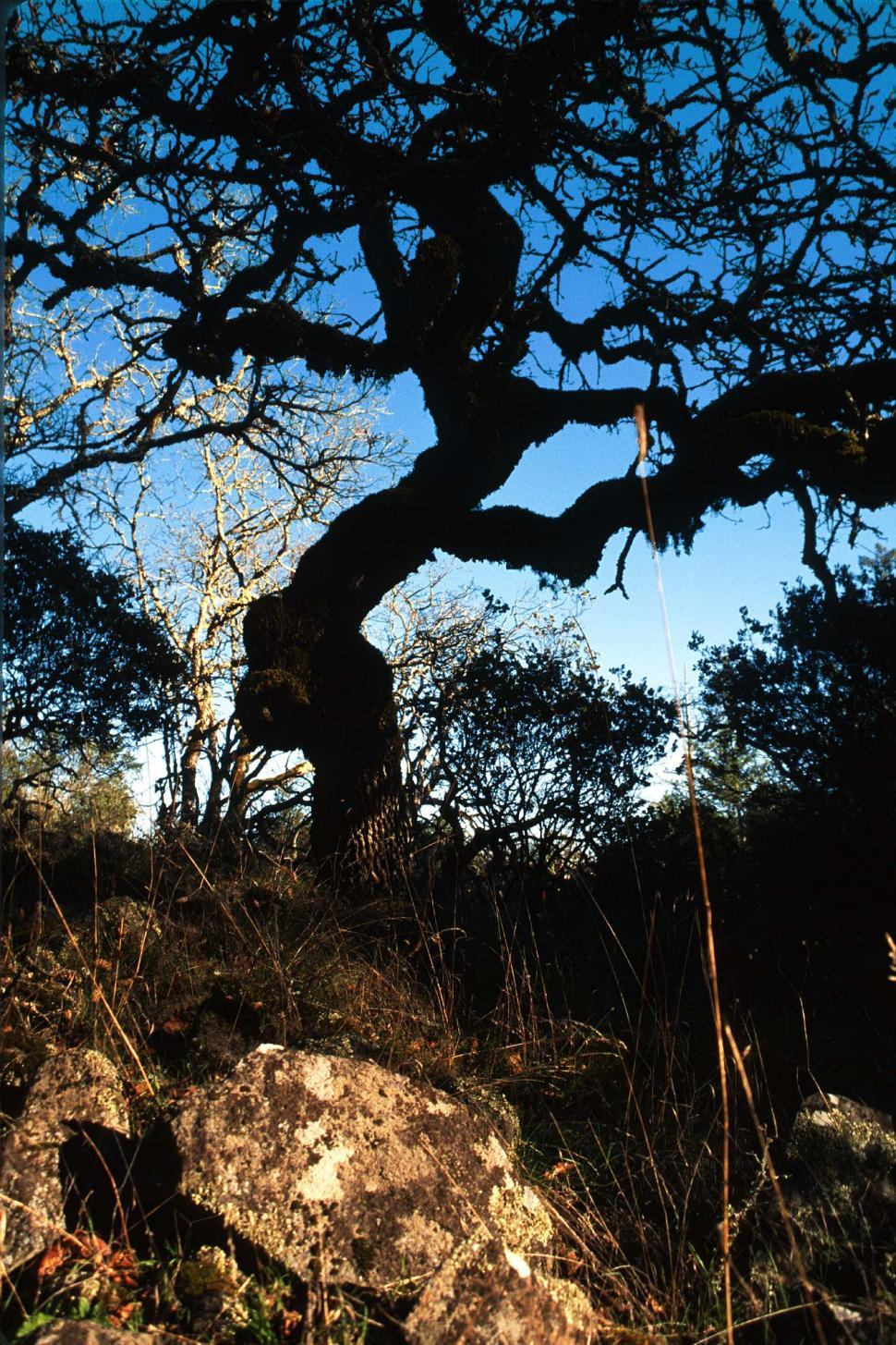 Download Free Stock HD Photo of Silhouette of twisted tree on a hill Online