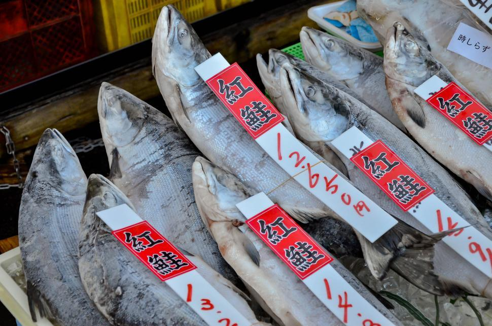 Download Free Stock HD Photo of Fresh Fish Laid out at Japanese Market  Online