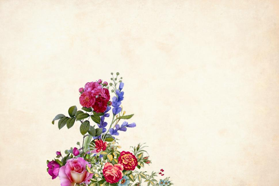 Download Free Stock Photo of flower Background - single flower