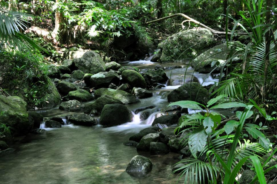 Download Free Stock HD Photo of Rainforest stream Online