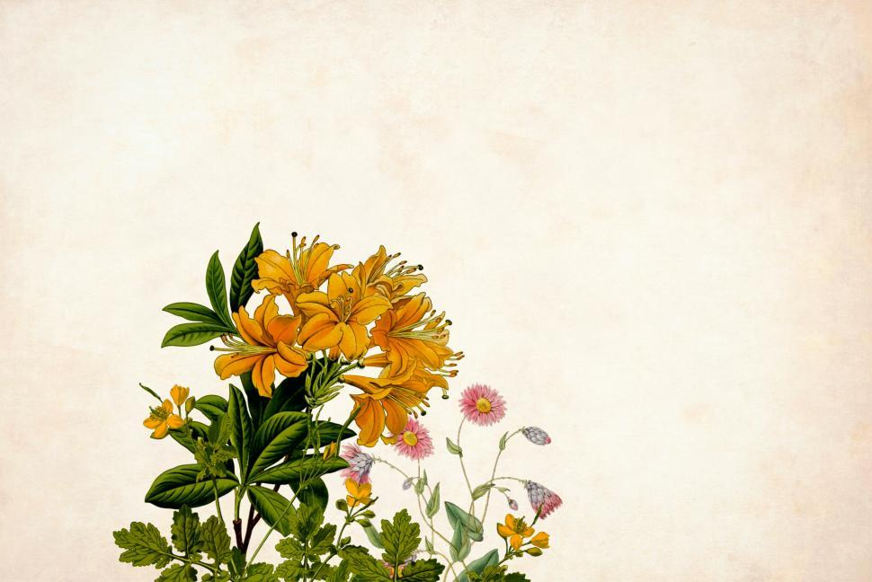 Download Free Stock Photo of Flower Background - Single Yellow Group