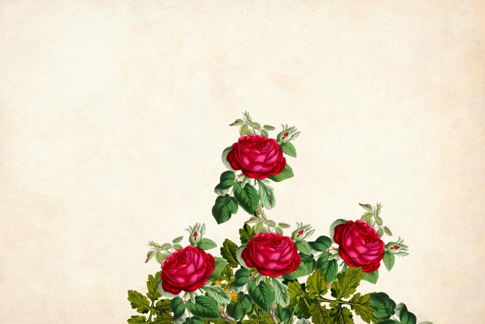 Download Free Stock Photo of flower Background - Four Roses