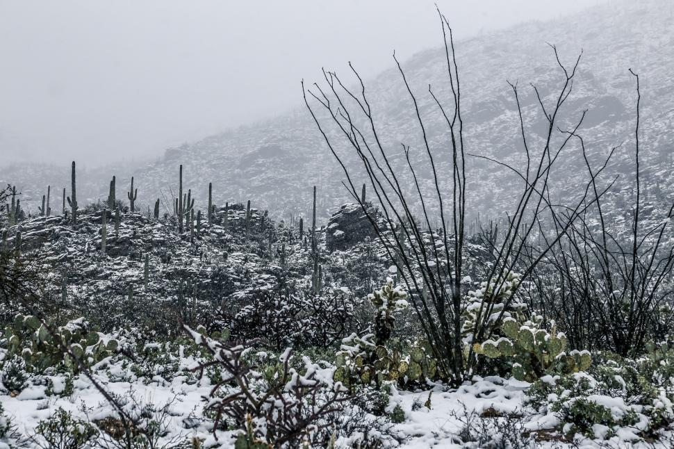 Download Free Stock Photo of Snowy Desert Scene
