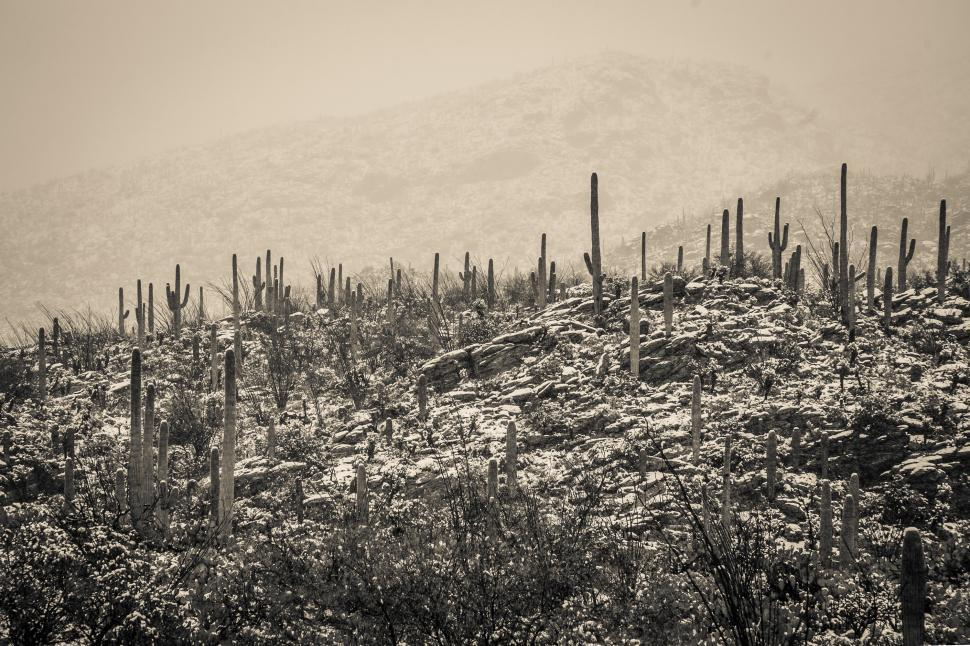 Download Free Stock Photo of Snow in the Desert - Warm Toned