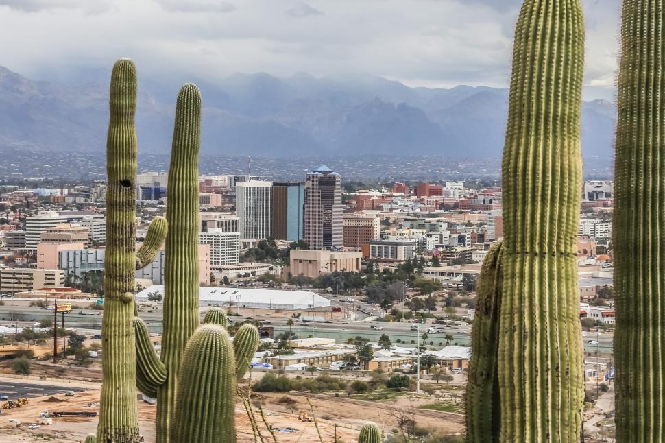 Download Free Stock Photo of Saguaro Cactus and Downtown Tucson