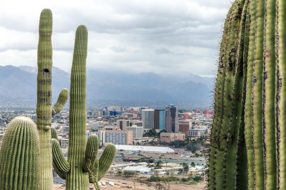 Download Free Stock HD Photo of Saguaros and Tucson Downtown Online