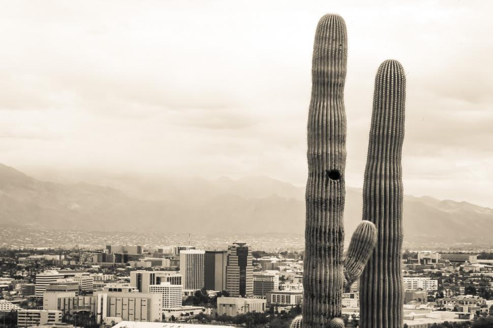 Download Free Stock Photo of Tall Saguaro cactus with city in the background