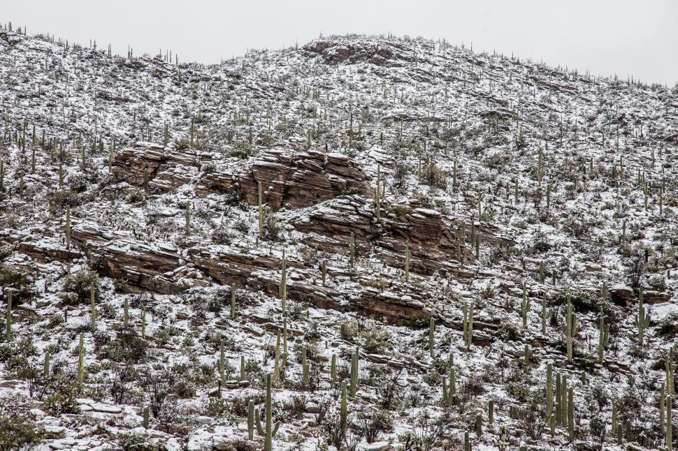 Download Free Stock Photo of Hillside of Layered Rocks and Cactus After Snow
