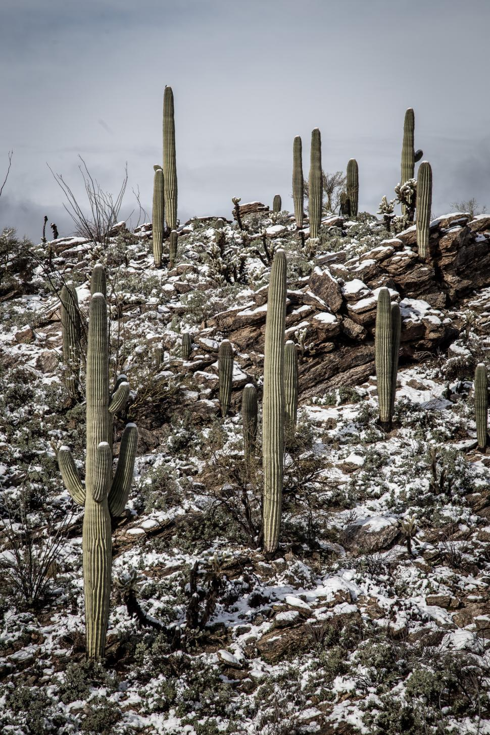 Download Free Stock Photo of Cactus and Rocks in the Desert After Snow