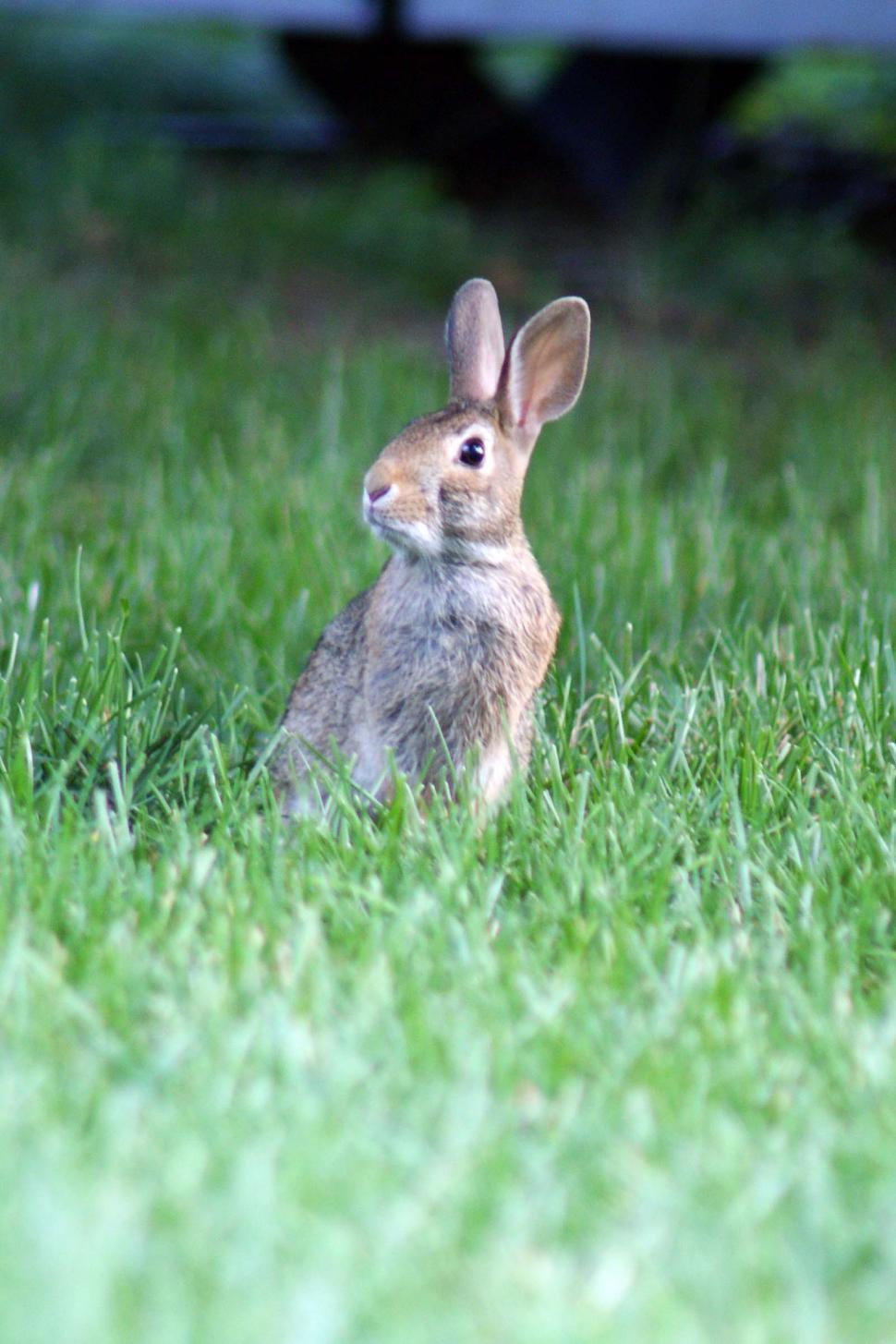 Download Free Stock HD Photo of RabbitPose Online