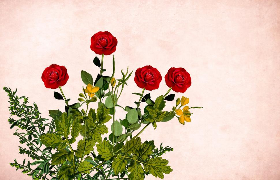 Download Free Stock Photo of Flower background - Four Red Flowers