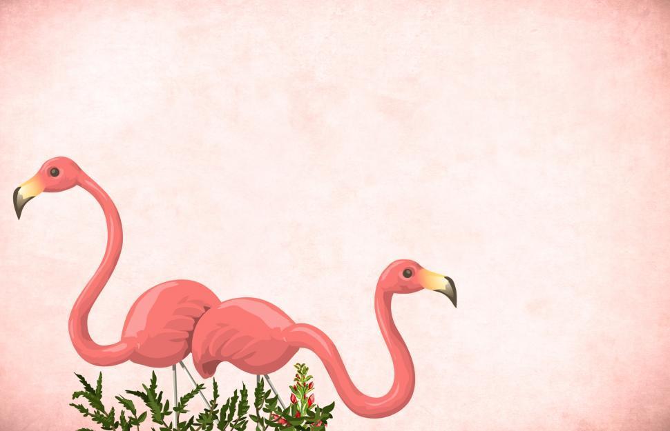 Download Free Stock Photo of Flamingos