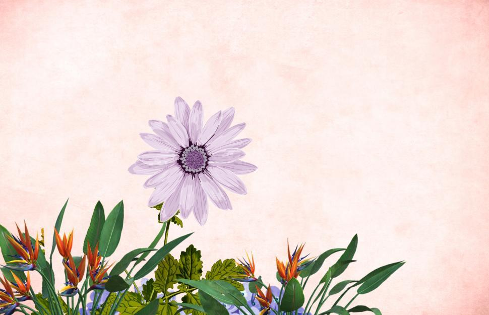 Download Free Stock Photo of Flower background - Single Purple Bloom